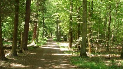 Waldweg zwischen Knittelsheim und Ottersheim