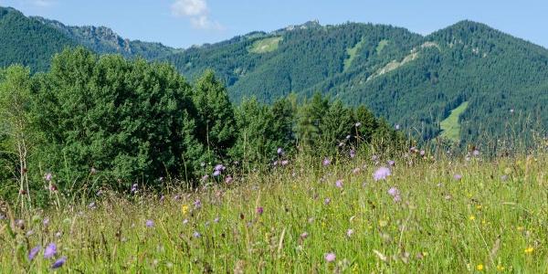 Mountainbiketour - Von Murnau über die Drei Marken - Blick in die Ammergauer