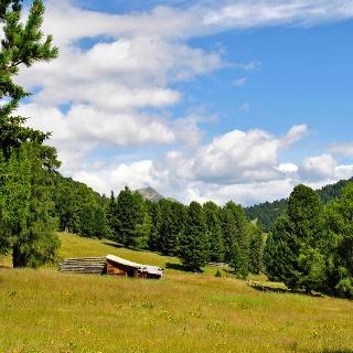 Alp meadows