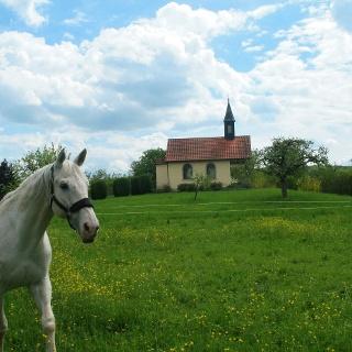 Ländliche Idylle in Dielheim - Balzfeld