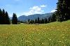 Bergwiesen bei der Gundhütte - @ Autor: Julian Knacker - © Quelle: Pfronten Tourismus