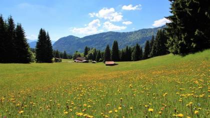 Bergwiesen bei der Gundhütte