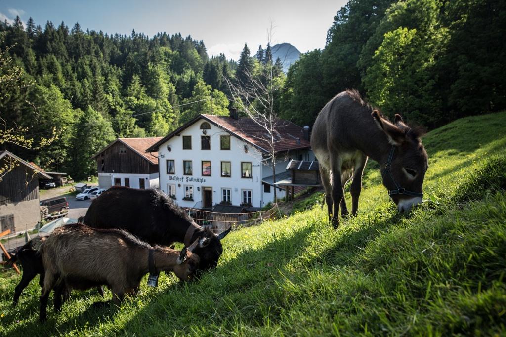 Fallmühle - @ Autor: Julian Knacker - © Quelle: Pfronten Tourismus