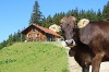 Dinserhütte mit Schumpen - @ Autor: Julian Knacker - © Quelle: Pfronten Tourismus