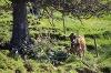 Schumpen bei der Dinserhütte - @ Autor: Julian Knacker - © Quelle: Pfronten Tourismus