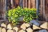 Bärenmoosalpe  - @ Autor: Julian Knacker  - © Quelle: Pfronten Tourismus