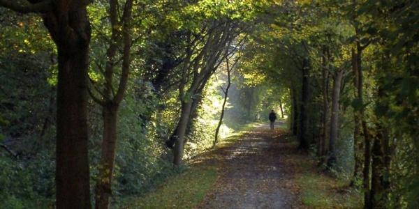 Rad- und Wanderweg auf der ehemaligen Kleinbahntrasse