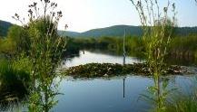 "Zum Naturschutzgebiet ""Schmiechener See"" (Öko-Tour 3)"