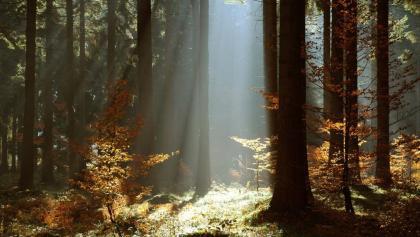 Thüringer Wald bei Frauenwald