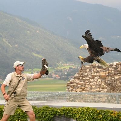 Adlerflugschau