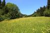 Bergwiese im Vilstal  - @ Autor: Julian Knacker  - © Quelle: Pfronten Tourismus