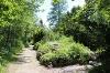 Kräuterreichtum im Alpengarten - @ Autor: Julian Knacker - © Quelle: Pfronten Tourismus