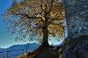 Burgruine Falkenstein im Herbst - @ Autor: Julian Knacker - © Quelle: Pfronten Tourismus