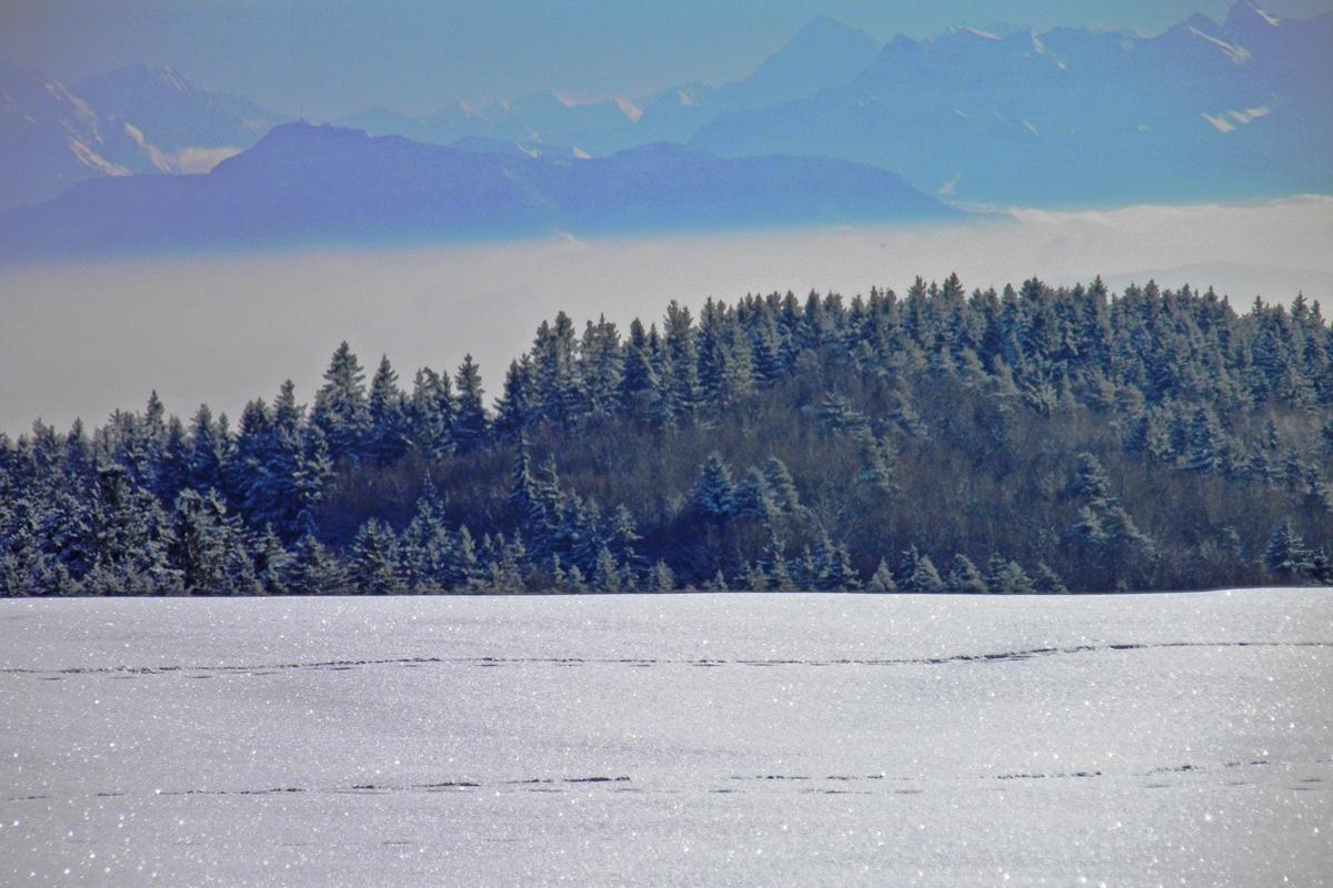 Blick zu den Schweizer Alpen