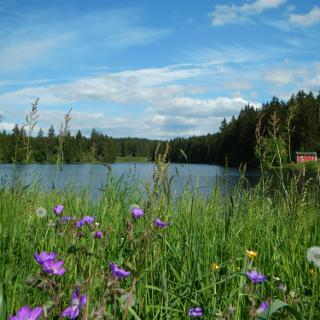 Badestelle am Ziegenberger Teich.