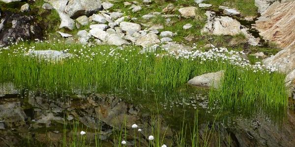 Flachmoor in der Göscheneralp