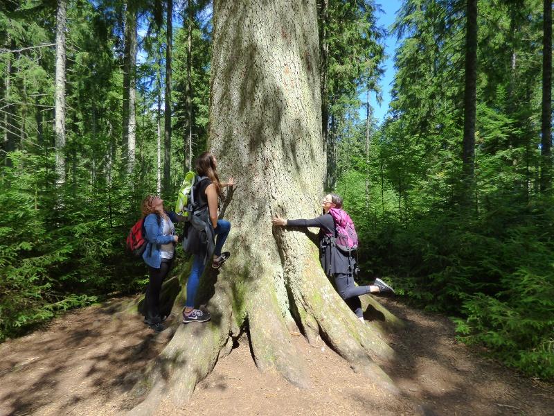 Freudenstadt: Rundwanderung zur Großvatertanne