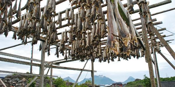 Ein Trockenfischgestell bei Ballstad