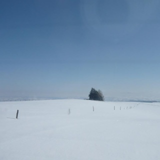 Winterlandschaft an der Loipe Eschach (3)