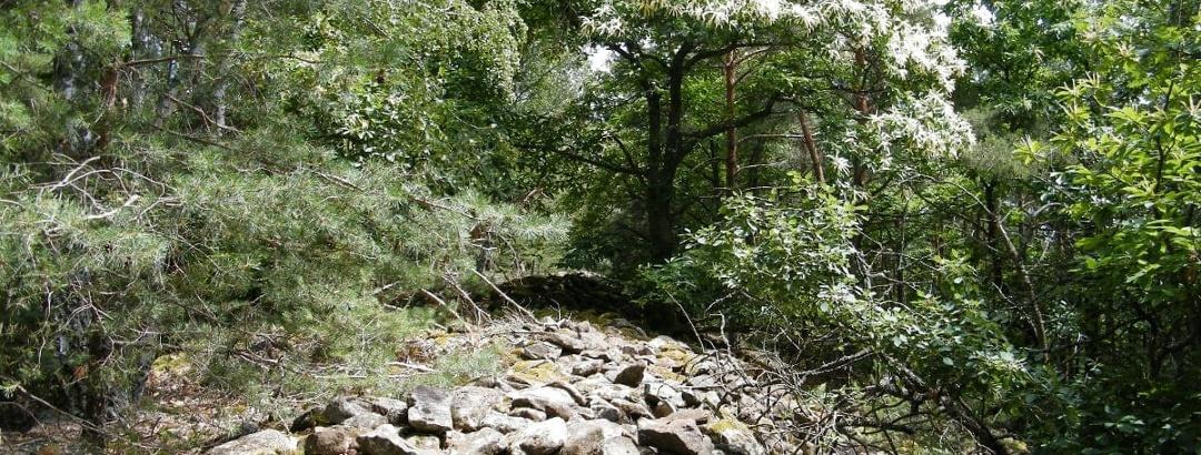 Der Ringwall oberhalb von Bad Dürkheim diente den Kelten einst zur Verteidigung.