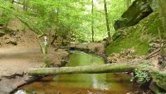 Die wildromantische Karlstalschlucht gehört zu den schönsten Tälern des Pfälzerwaldes.