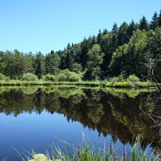 See im Naturschutzgebiet Dingelsdorf