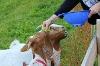 Brotzeit für die Buronzeigen beim Milchhäusl - @ Autor: Julian Knacker - © Quelle: Pfronten Tourismus