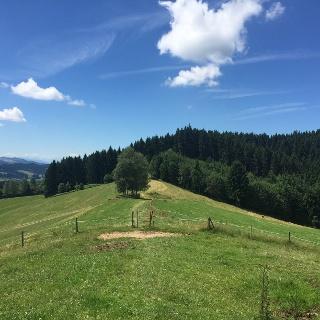 Am Sonneckgrat bei Weitnau im Allgäu