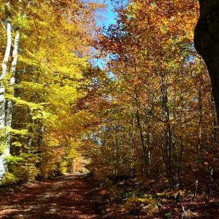 Entspannung und Information auf dem Klimaweg Sonnenbühl
