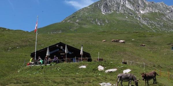Hütte Las Palas mit den zwei Eseln