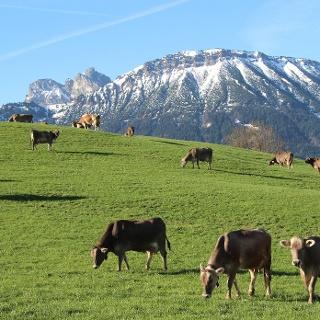 Der Breitenberg - Pfrontens Hausberg