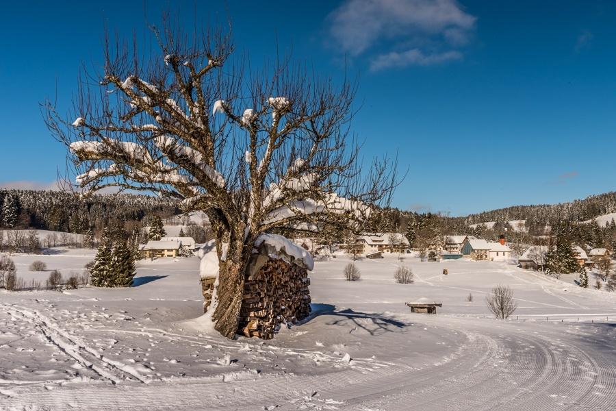 Winter - Herrischried: Bühlrunde - Winterwanderweg