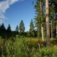 Wälder der Ardennen