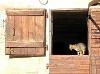 Bauernhofkatze   - © Quelle: Hohenlohe + Schwäbisch Hall Tourismus e.V.