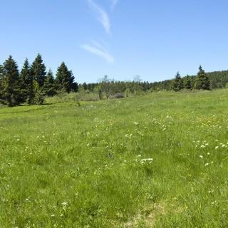 Das Biotop Ebertswiese im frischen Grün.