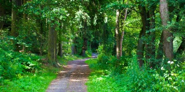 Wald bei Weißenborn