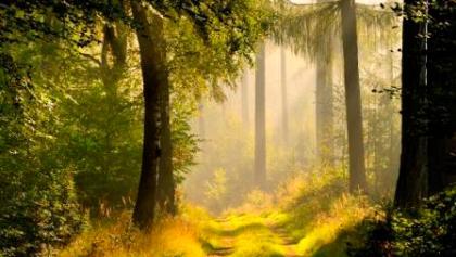 Waldimpressionen aus dem Schönbuch