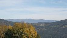Riedelswald von Grün