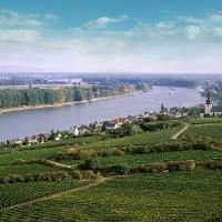"""Die """"Schönste Weinsicht"""" von Rheinhessen"""