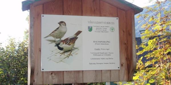 """Der Sperling, bei uns heißt er einfach """"Spatz"""", einer der häufigsten Vögel bei uns"""