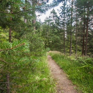 Through the forest of Halserberg