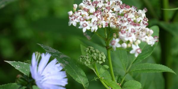 Blumenimpressionen am Weg