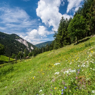 Beautiful meadow trail towards Warterdorf village