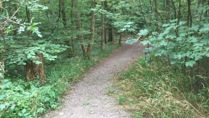 Weg im Naturschutzgebiet Greutterwald