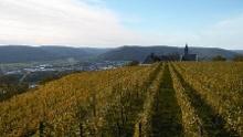 Fränkischer Rotwein Wanderweg - 6. Etappe von Großheubach nach Bürgstadt