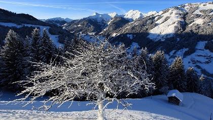 Winter-Baum
