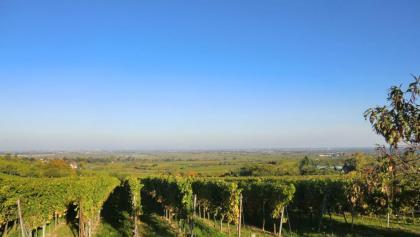 Ein Blick über die Weinreben in die Rheinebene.