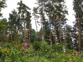 Foto schöner Wald am Weg