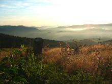 Ausblick auf den wiederaufgeforsteten Wald.