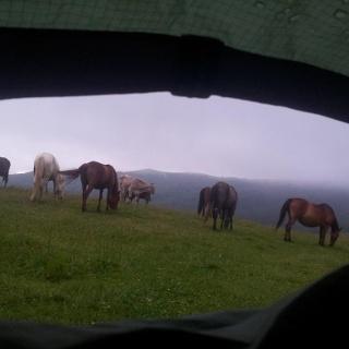 Horses at Eko Katun Vranjak